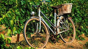 Bike Wine Country